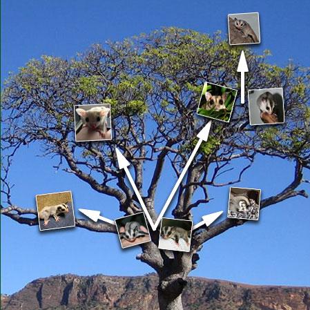 homelink-tree